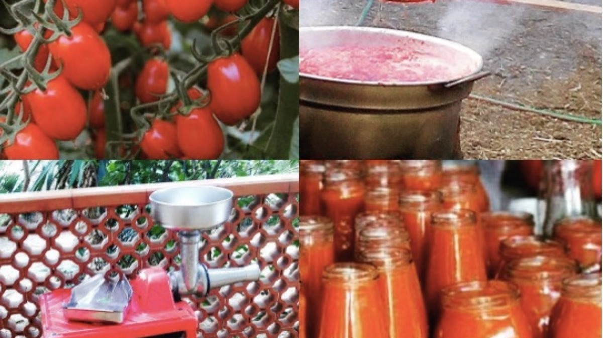 passata tomato sauce
